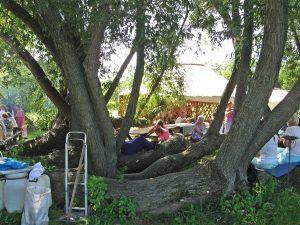 http://katacafe.hu/, Kajáriné Katalin, kávéfestmény, ganoderma gomba, meridiántorna, Hollóvölgy, akupresszúra, akupunktúra, Eőry Ajándok, coffeart, coffeelove, egészség,
